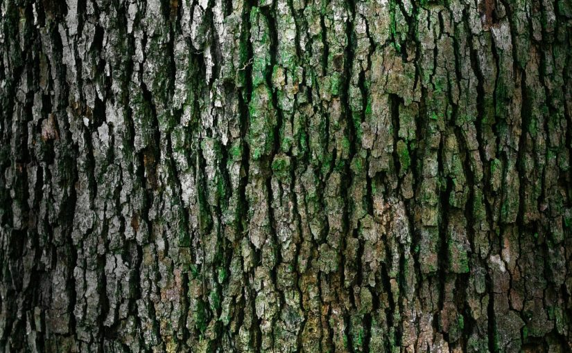 Śliczny oraz {czysty zieleniec to nie lada wyzwanie, szczególnie jak jego konserwacją zajmujemy się sami.